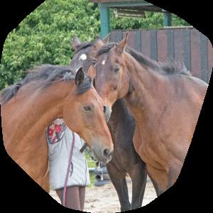 Pferd als Therapeut