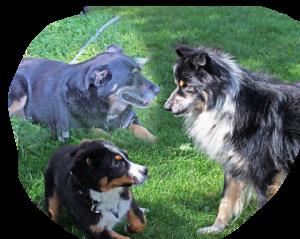 Therapie mit Hunden im Reittherapeutischen Sportverein Pechüle e.V.